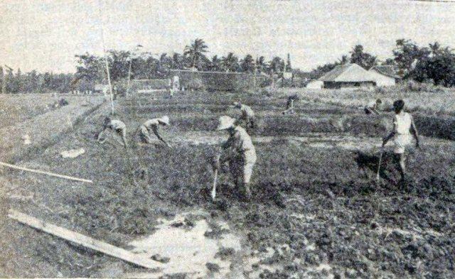 Buitenzorg, jeugdlandbouw o.l.v. de heer Braches