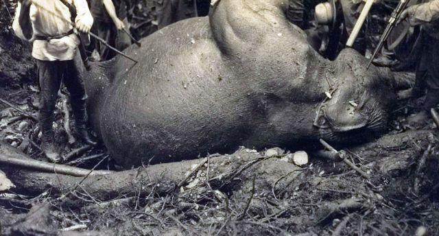 De dood van een olifant, tijdens een expeditie van Lapré