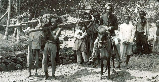 Gedode tijger na de jacht te Soepajang, 1890
