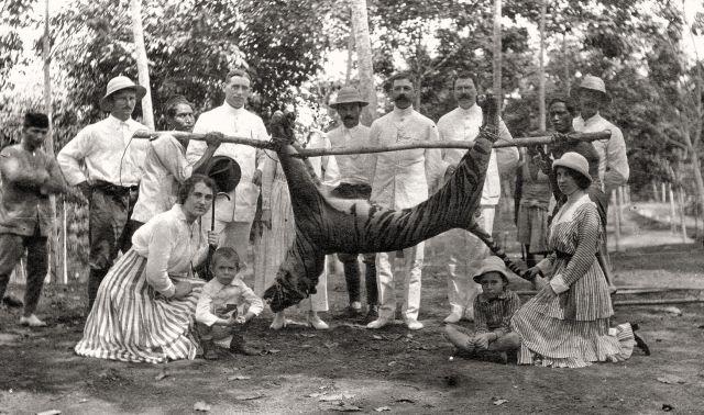 Gezelschap met gedode tijger in Nederlands-Indië, ca. 1915