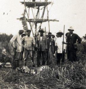 Gedode tijger bij uitkijktoren
