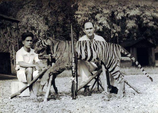 E.G.A. Lapré, controleur van Painan, met één van zijn helpers bij een door hem geschoten tijger te Doekoe bij bij Taroesan bij Painan, 1937
