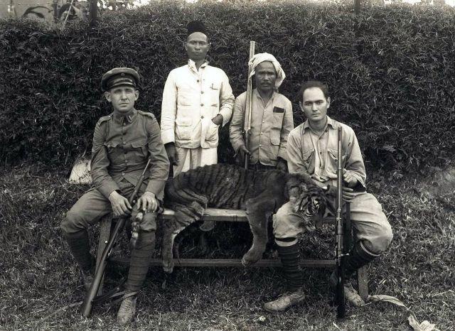 Een door aspirant-controleur E.G.A Lapré van Painan (rechts) geschoten tijger te Kota Rendah met links [...] Starreveld, 1933