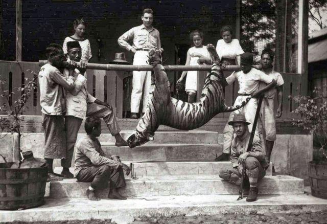 Jachtgezelschap van resident L.C. Westenenk met een geschoten tijger op de Konak, het buitenverblijf van Westenenk bij Kepahian, 1919
