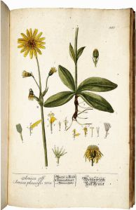 'Arnica Officialis', Elisabeth Blackwell
