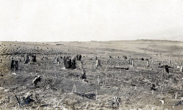 Terrein plantklaar, december 1928