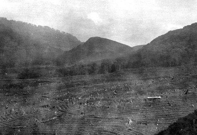 Terrein in 1928 met thee beplant, op achtergrond hellingen van de Andjasmoro