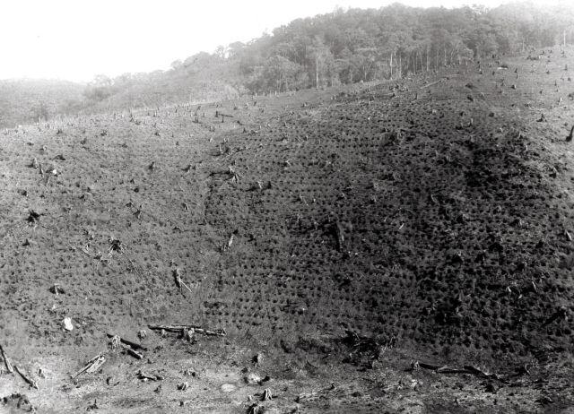 Een der zwaarste hellingen ontgonnen in 1929 en van plantgaten voorzien